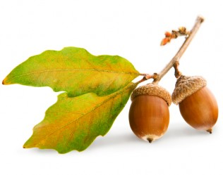 start-up acorn