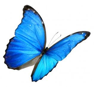 Tax butterfly